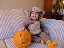 Jamie the monkey with a bear pumpkin