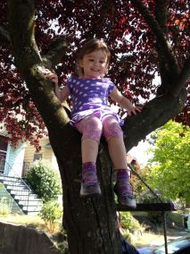 Audrey figured out how to climb up the ladder and beyond into our neighbor's tree.