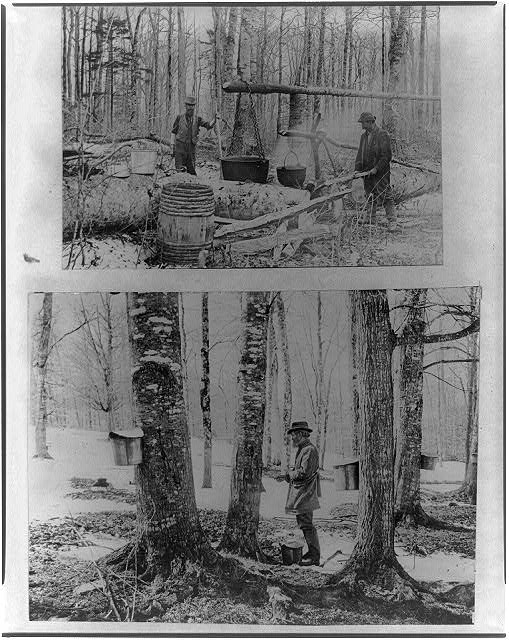 """""""Gathering and processing maple syrup, ca. 1900""""; 1900; courtesy of Library of Congress"""