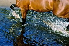 Trotting a hole in the wind – and the water.