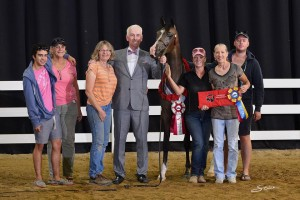 Madison MF, unanimous Champion Arabian Yearling Filly, Region IV, 2015. Photo by Stine.