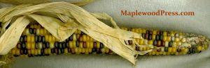 MaplewoodPress03Corn
