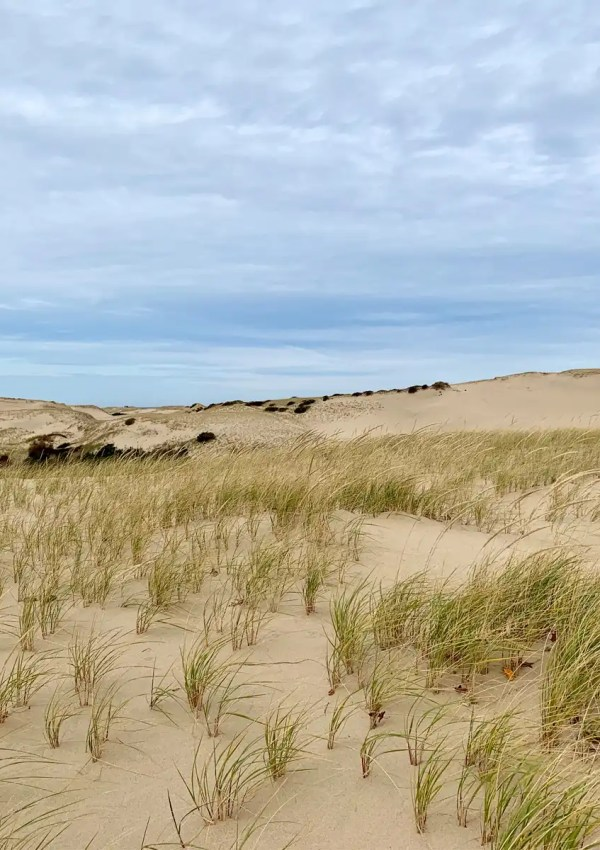 Dog-Friendly Guide to Cape Cod, Massachusetts