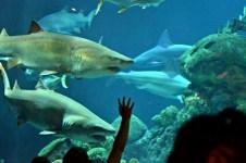 Shark food!
