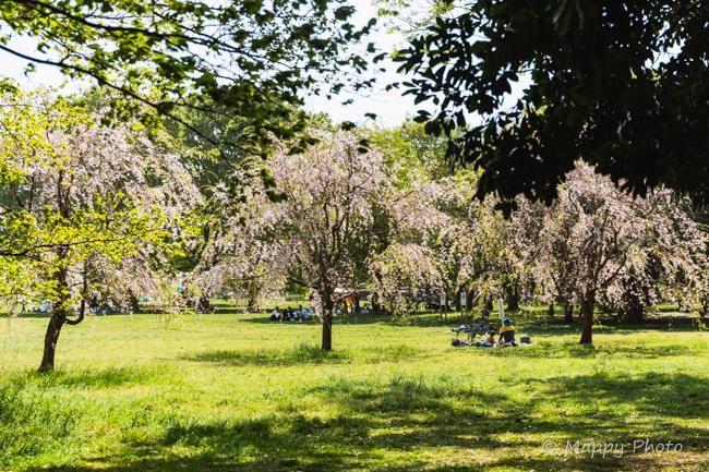 小金井公園 東京 公園 おすすめ公園 小金井市 多摩