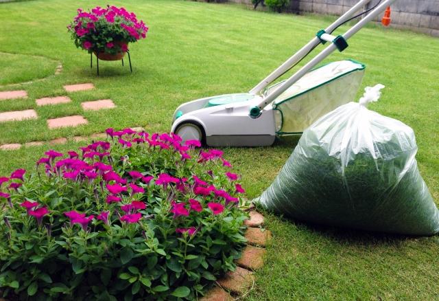 8月の芝生の手入れは芝刈りだけで十分!