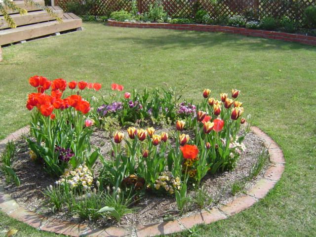 4月の芝生のお手入れやっておきたい事【初めて植えるなら最適】