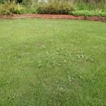 雑草対策と芝刈りが手に負えなくなった時の対処法【おすすめ3選】
