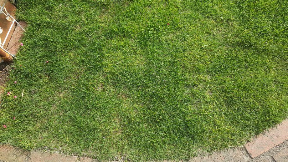 芝生の水切れサインを遠目に見る