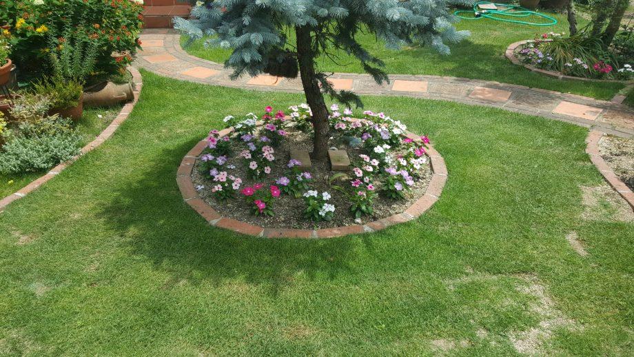【芝生の殺虫剤】フルスウィングの効果的な使い方【我が家の経験談】