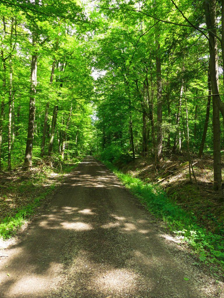 Forstweg im Wald Tipps zum Trekking