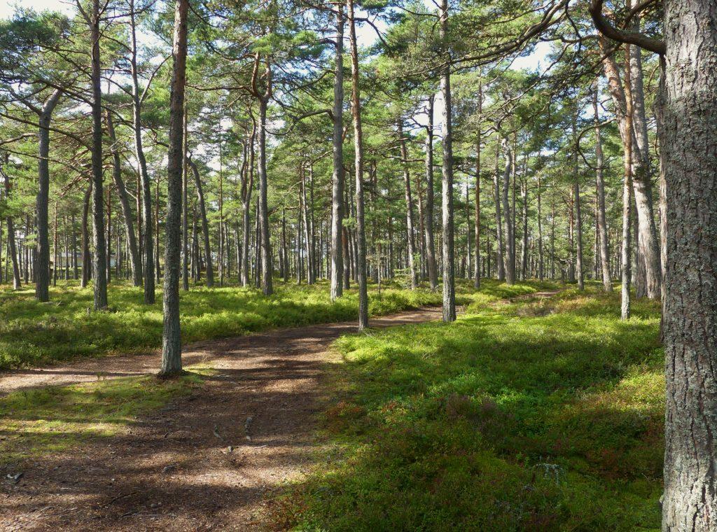 Sandhamn Wald