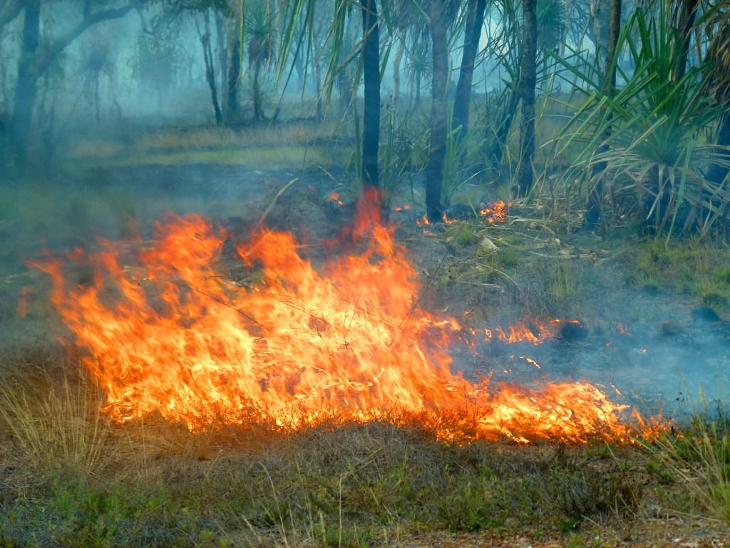 Waldbrand Australien Outback