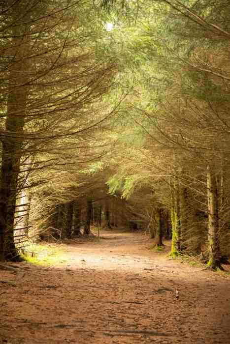 Tweed valley hikes take you to some forests in the wilds of south Scotland