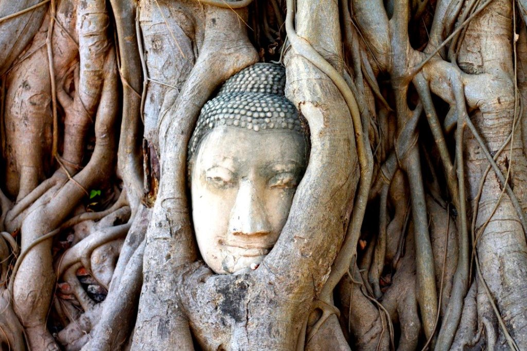 Buddha head in the tree, Ayutthaya