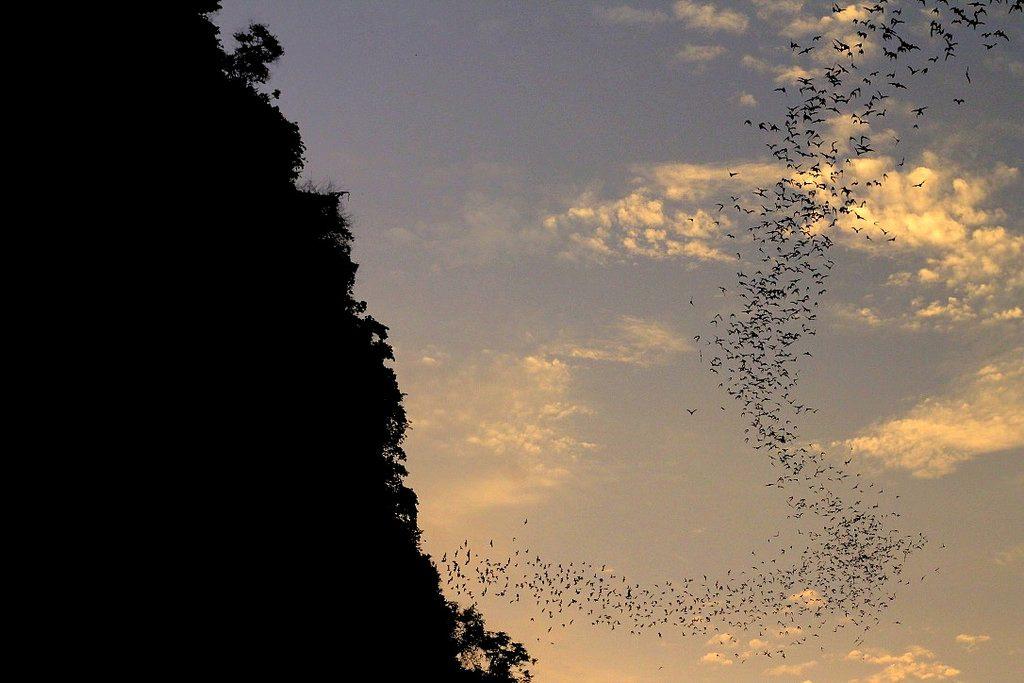 battambang, bat cave, cambodia