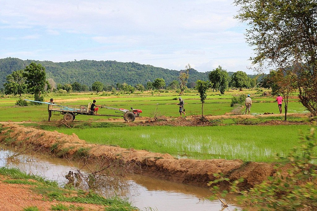 battambang, rice fields, cambodia