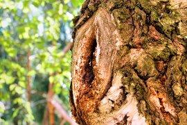 Wooden eye