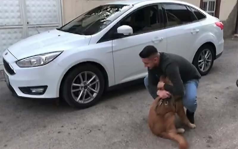 Sahibine kavuşan köpeğin sevinci