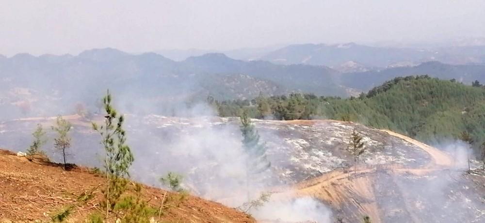 Kahramanmaraş'taki yangınlarda 65 hektar orman alanı zarar gördü