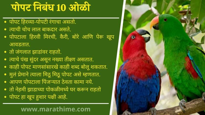 पोपट निबंध 10 ओळी, 10 Lines on Parrot in Marathi, Essay on Parrot in Marathi