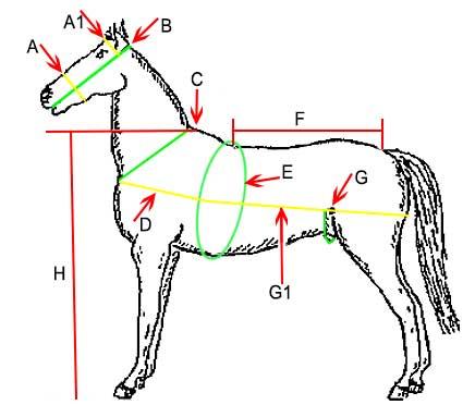 Maat-tabel-paardentuig