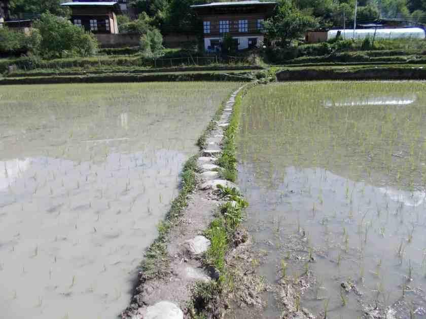 Global Limits Bhutan - The Last Secret - 200km Race Report 65