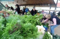 Organic Farmer's Market, Coín