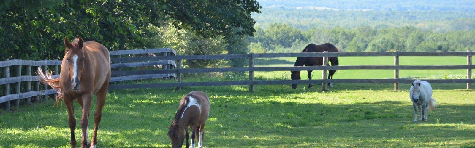 Mac & Ponies - Summer