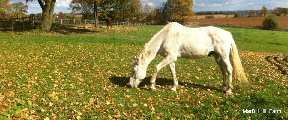 Monty at MarBill Hill Farm