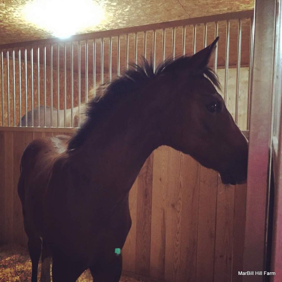 MarBill Hill Farm - Welmbley - Horse Coat