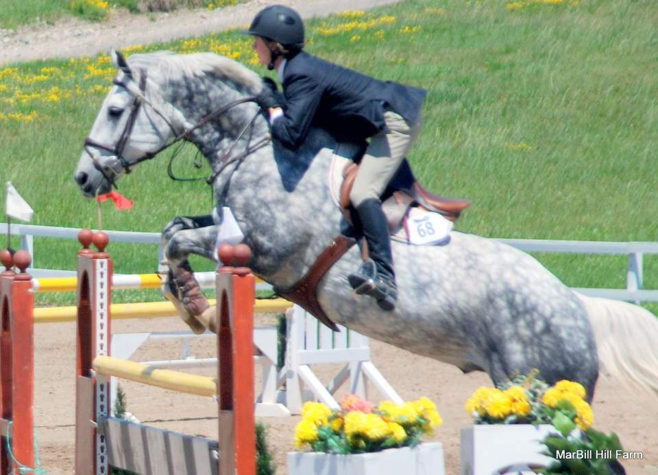 MarBill Hill Farm - Star - Jumping