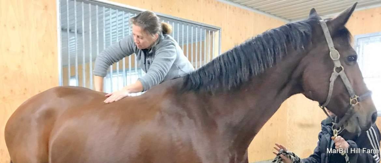 MarBill Hill Farm - equine chiropractic treatment - Cali - slider
