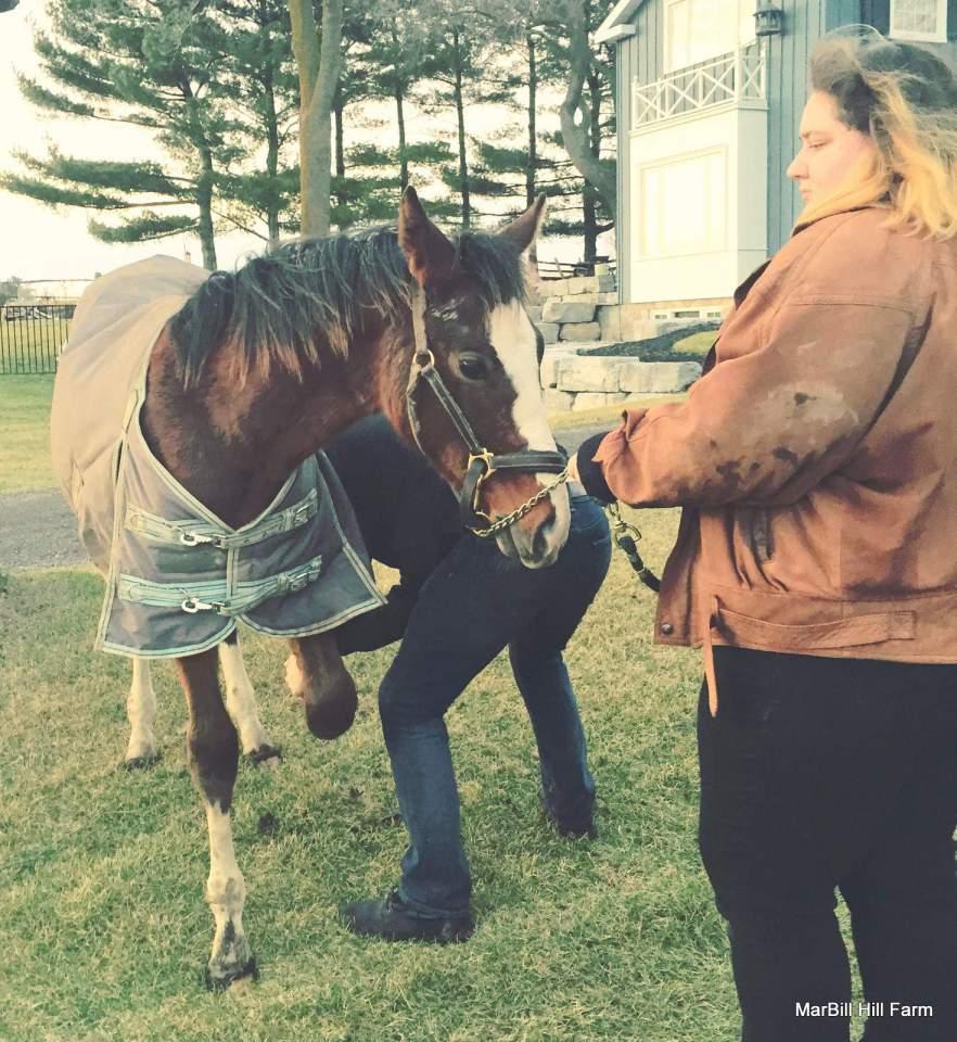 MarBill Hill Farm - Bandit with Nyssa