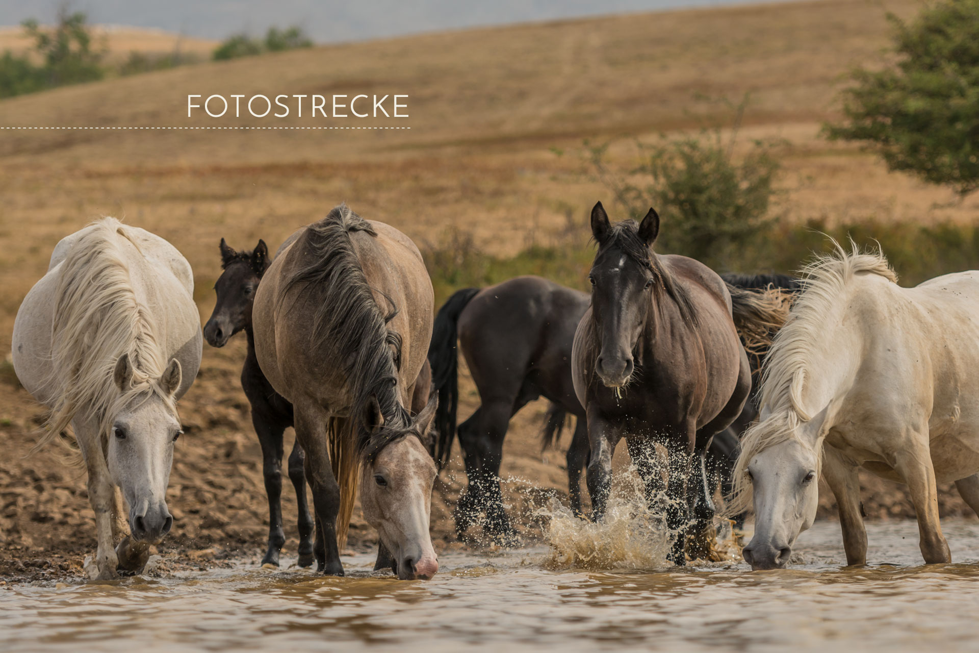 "Featured image for ""The last Waterhole"""