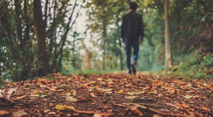 autumn-1869160_1920.jpg