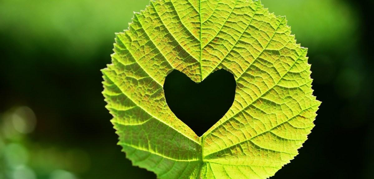 Tu corazón, tu imán, tu poder de atraer o repeler