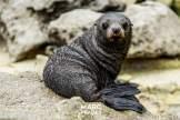abel tasman national park-seals-18
