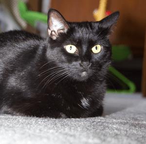 Cat blogging