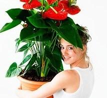 Planten met een hart