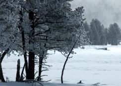 Yellowstone Winter (Montana)