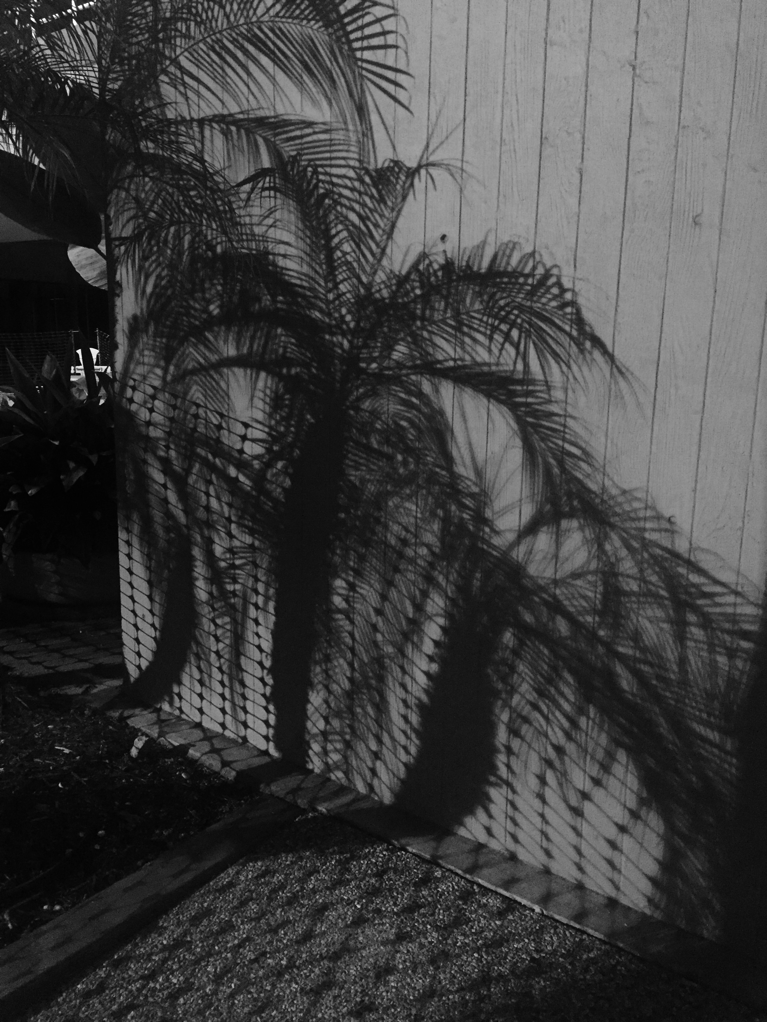 Shadows of some palm trees in Downtown Los Angeles