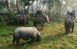 Chitwan National Stop