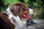 C'est l'heure de la promenade - Accessoires pour chiens