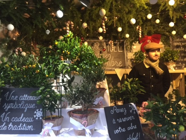 Les petits arbres de Noël au Marché