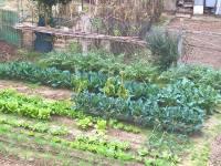 L'orto a Novembre, semina e raccolto