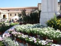 Ancona Flower Show, mostra mercato di piante rare e inconsuete
