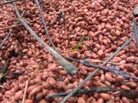 L'Orto di Ottobre, semina, raccolto e lavori