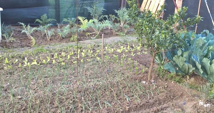 lavori nell'orto e giardino a dicembre