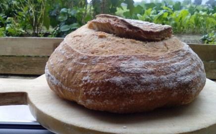 pane di Monica